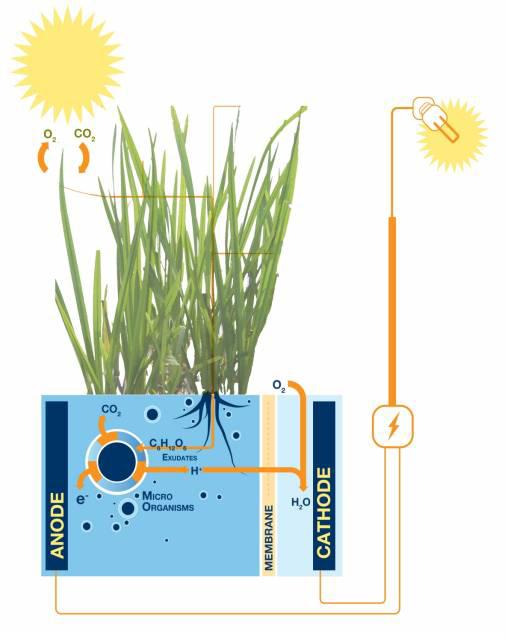 Plant-e_technologie